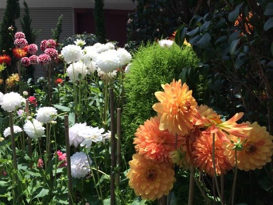 FlowerDome-129